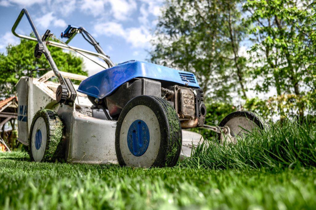 jak poprawnie założyć trawnik